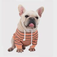 Dog Clothes: Striped Rabbit Lambskin Hoodie